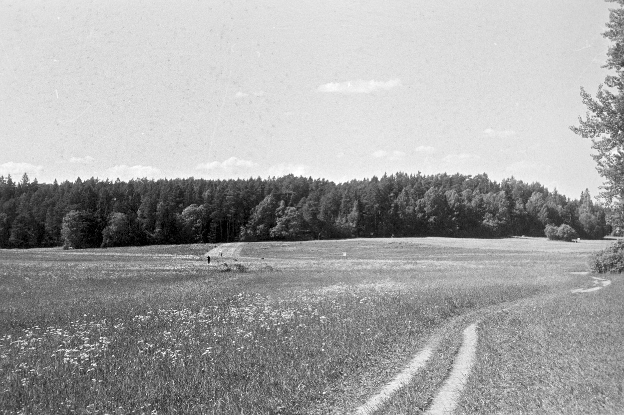 A photo of a sunny field with a trampled path leading off to the side